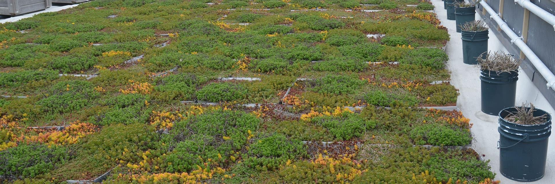 Cum alegi vegetatia pentru acoperis terasa verde
