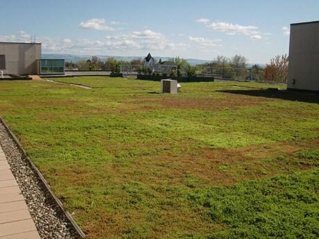 Ideea de acoperis verde in Romania